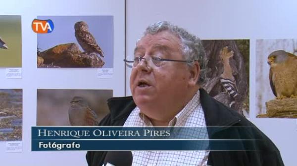 Exposição Henrique Oliveira Pires