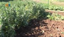 Horta Urbana na Falagueira - Venda Nova - Um Projecto em Comunidade