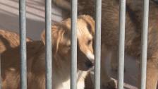 CROAMA Apela à Adopção Responsável de Animais